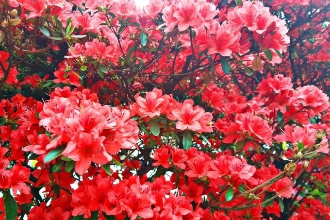 PicsArt_04-11-09.08.17.jpg