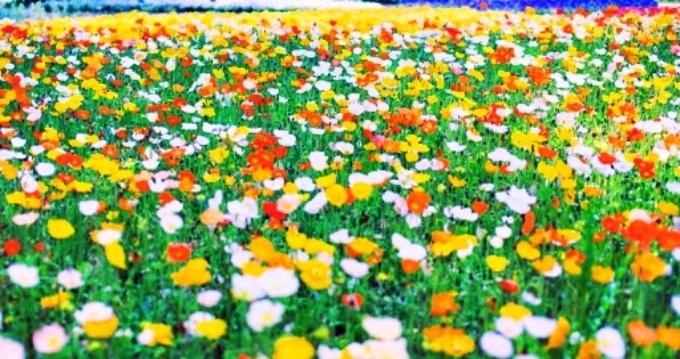 PicsArt_04-12-04.23.55.jpg